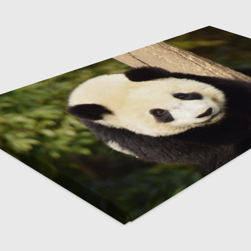 Холст прямоугольный  Фото 04, Панда на дереве