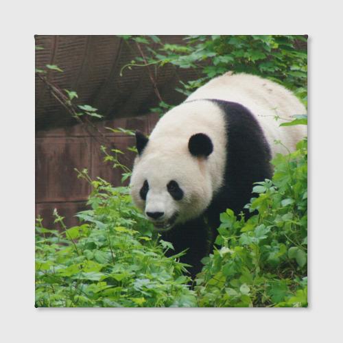 Холст квадратный  Фото 02, Панда в лесу