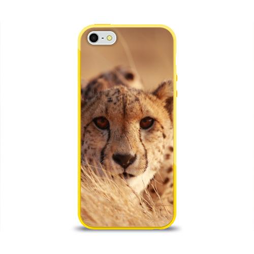 Чехол для iPhone 5/5S глянцевый Гепард Фото 01