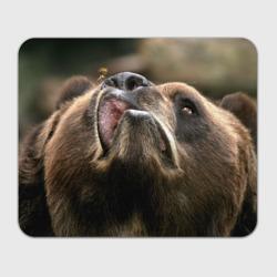 Медведь и пчела