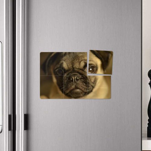 Магнитный плакат 3Х2  Фото 04, Мопс