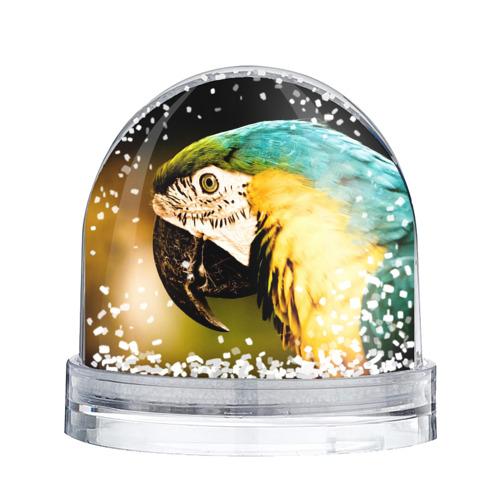Водяной шар со снегом  Фото 02, Попугай