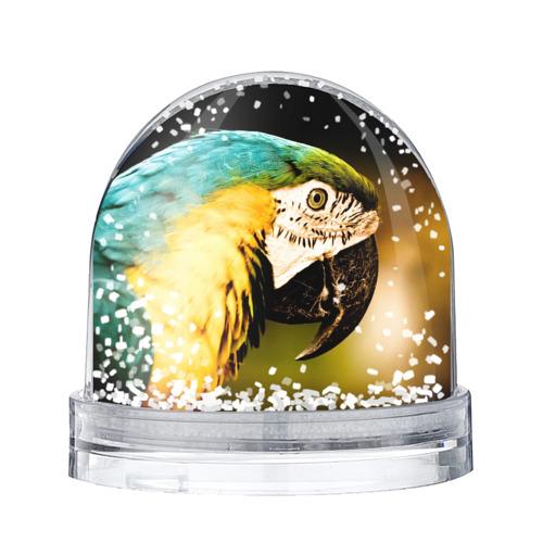 Водяной шар со снегом  Фото 01, Попугай