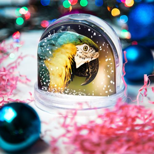 Водяной шар со снегом  Фото 03, Попугай