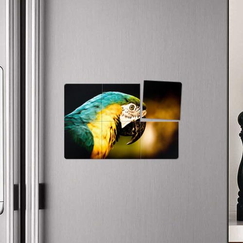 Магнитный плакат 3Х2 Попугай Фото 01