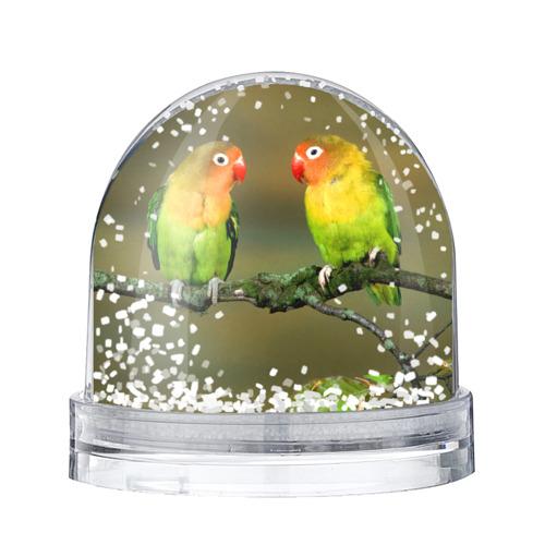 Водяной шар со снегом  Фото 01, Попугаи