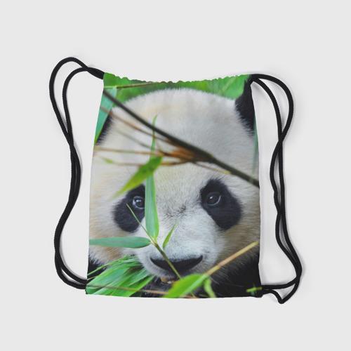 Рюкзак-мешок 3D  Фото 05, Панда в лесу