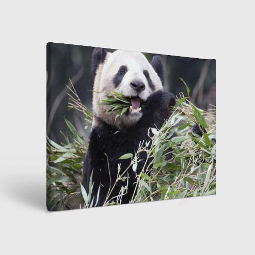 Холст прямоугольный  Фото 01, Панда кушает