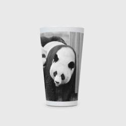 Панды чб фото