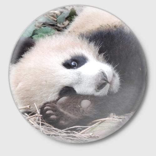 Лапка панда