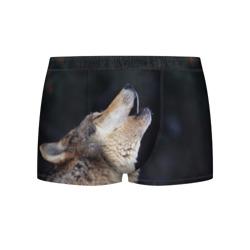 Вой серого волка