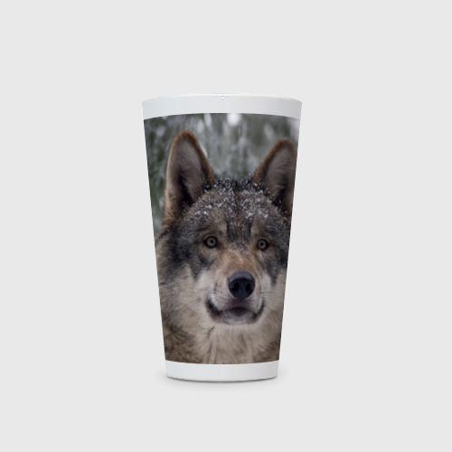 Кружка Латте  Фото 03, Серый волк