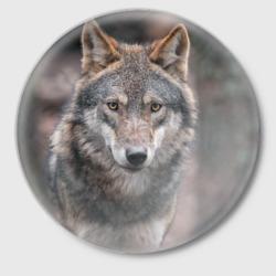 Волк - санитар леса