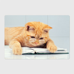 Кот ученый - интернет магазин Futbolkaa.ru