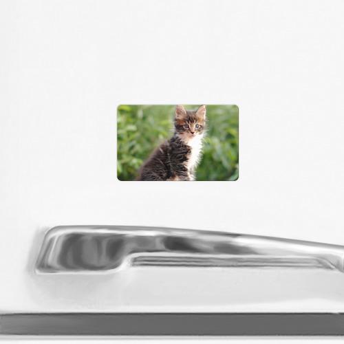 Магнит виниловый Visa  Фото 02, Породистый котено