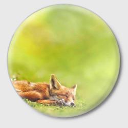Лисичка спит