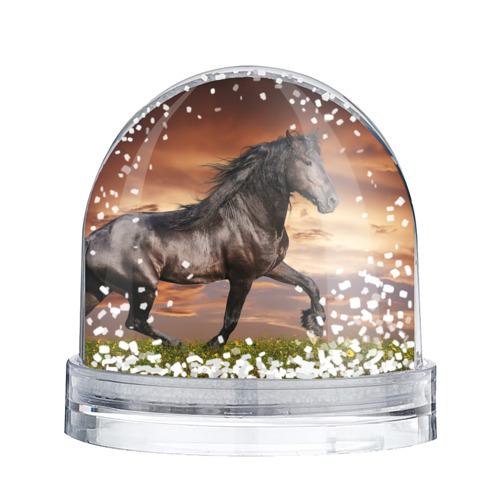 Водяной шар со снегом  Фото 02, Черный конь