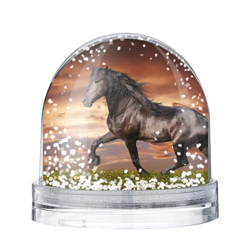 Водяной шар со снегом  Фото 01, Черный конь