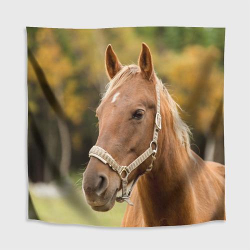 Скатерть 3D  Фото 02, Лошадь