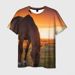 Лошадь на закате