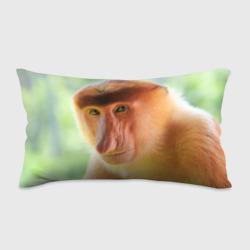 Рыжая обезьяна