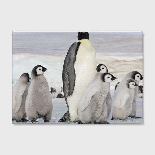 Холст прямоугольный  Фото 02, Пингвин и пингвинята