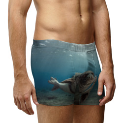 Тюлень под водой