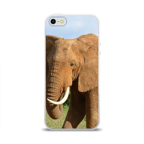 Чехол для Apple iPhone 5/5S силиконовый глянцевый  Фото 01, Слон