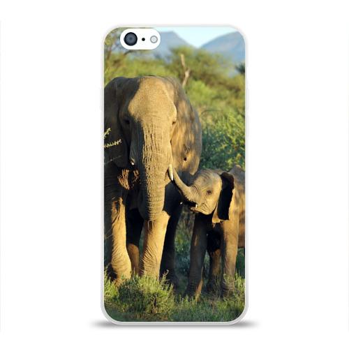 Слониха и слоненок в природе