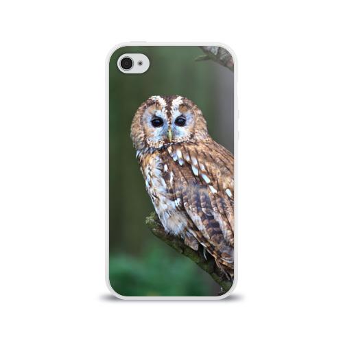 Чехол для Apple iPhone 4/4S силиконовый глянцевый  Фото 01, Сова