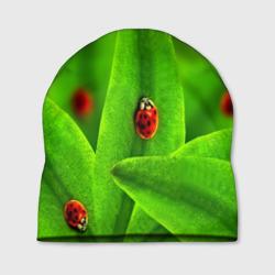 Милые насекомые