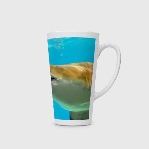 Кружка Латте  Фото 02, Тигровая акула
