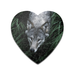 Волк в траве