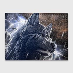 Волк и дождь