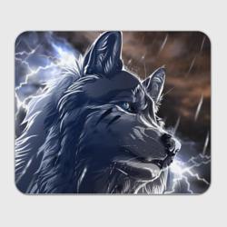Волк и дождь - интернет магазин Futbolkaa.ru