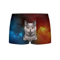 Кот в космосе!