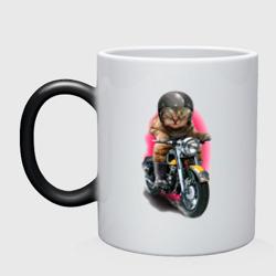 Кот мотоциклист