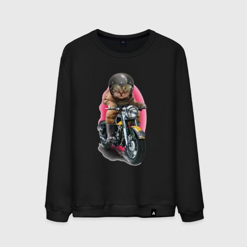 Мужской свитшот хлопок Кот мотоциклист Фото 01