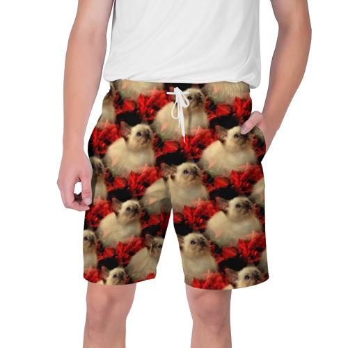 Мужские шорты 3D  Фото 01, Котики