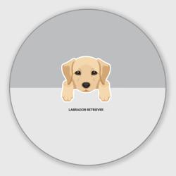 Лабрадор щенок