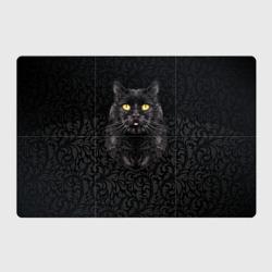 Чёрный котик