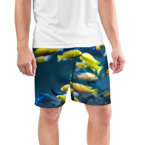 Мужские шорты 3D спортивные  Фото 03, Рыбки