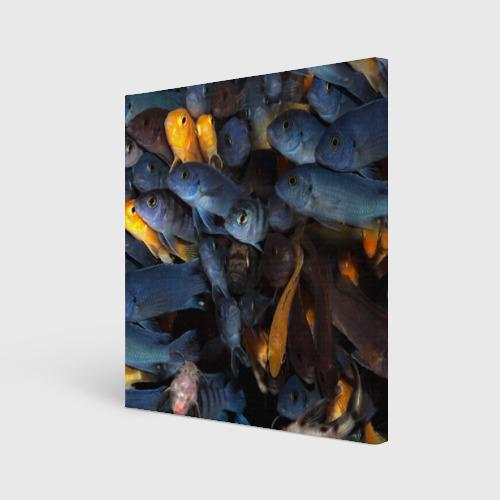 Холст квадратный  Фото 01, schooling fishes