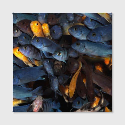 Холст квадратный  Фото 02, schooling fishes