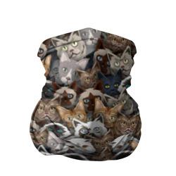 Коты разных пород