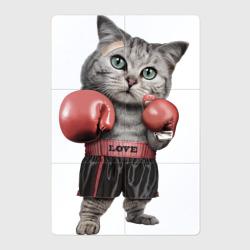 Кот боксёр