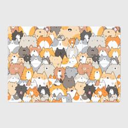 Кошачья стая