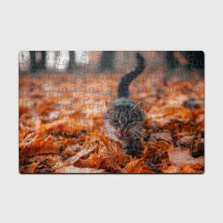мяукающий кот осенние листья