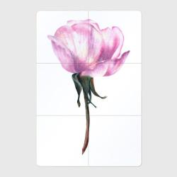 Нежность розы